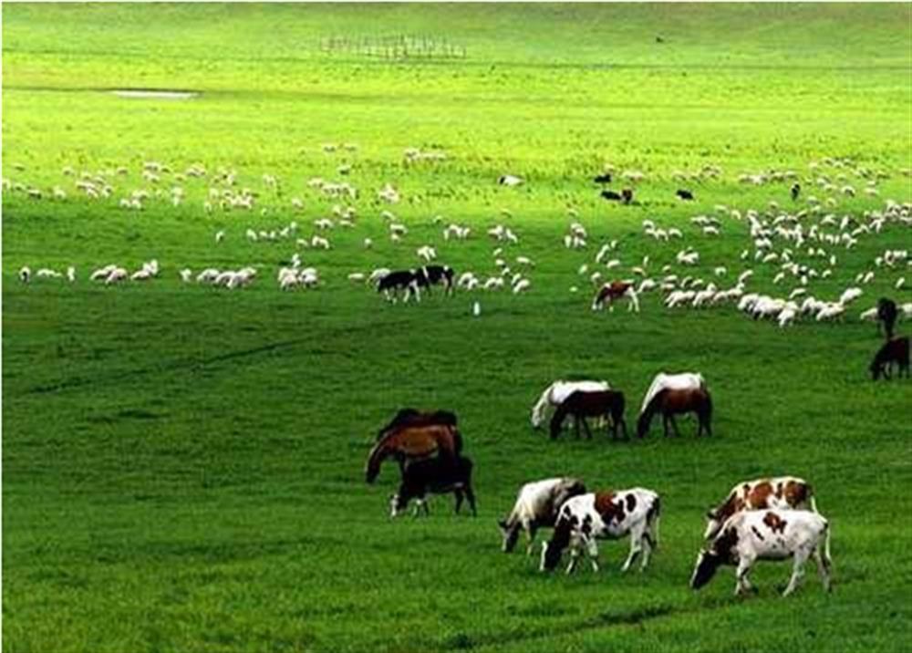 呼和浩特 大草原